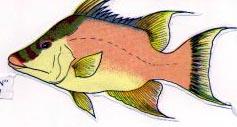 Peces Y Crustaceos Datosfotos