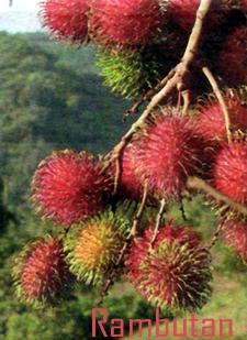 Arboles Nativos Endémicos Y Oriundos De Puerto Rico